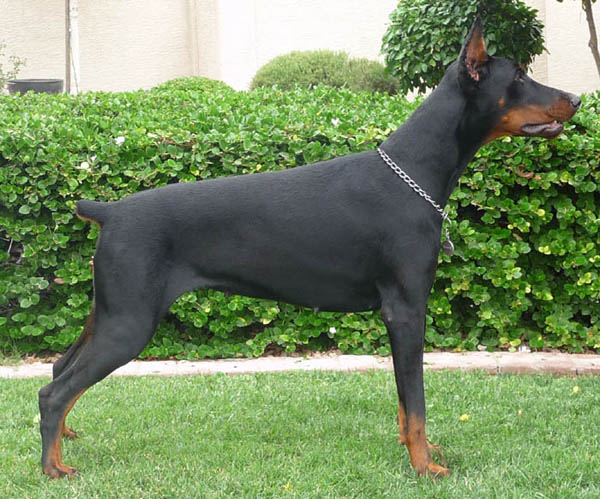 Feliss Moravia Heart. 