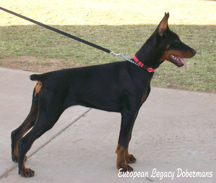 Feliss Moravia Heart is 5 months of age on this picture. 