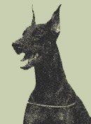 European Legacy Dobermans